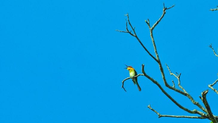 8 Spesies Burung di Indonesia Terancam Punah