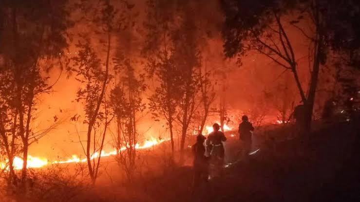 19 Tewas dalam Kebakaran Lahan di Provinsi Sichuan, China