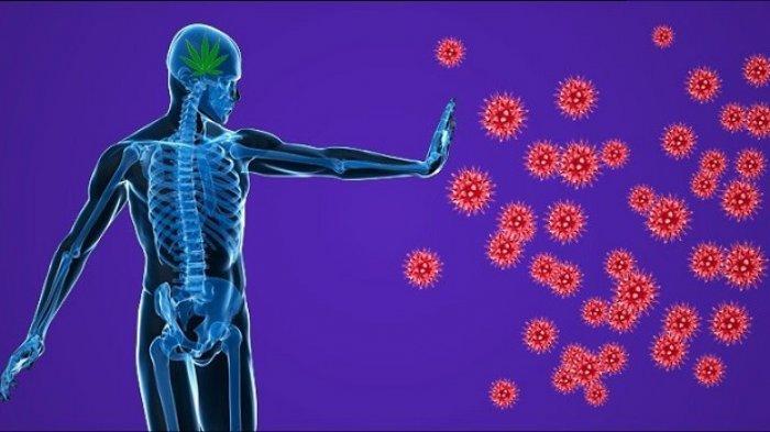 Begini Cara Menjaga Imun Tubuh
