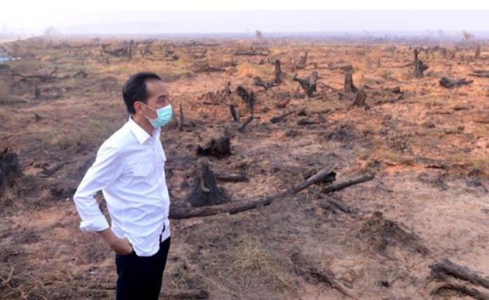 Jokowi Minta Penegakan Hukum Karhutla Tanpa Kompromi